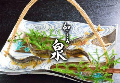 和ごころ泉 Wagokoro Izumi